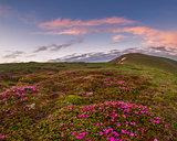Amazing landscape with flowers