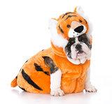 dog wearing tiger costume
