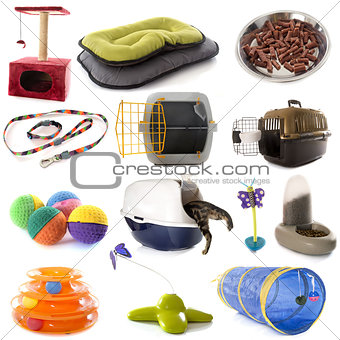 group of cat accessories