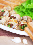 Tasty escargot dish