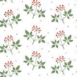 Ginseng seamless pattern