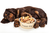 Cute Cocker Spaniel Puppy Dog Sleeping by Bowl of Biscuits