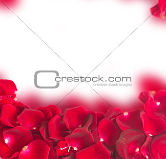 frame of dark  red rose petals