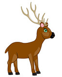Cartoon of the deer with horn