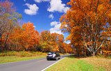 scenic drive in Orange Yellow Maple Tree Fall Foliage