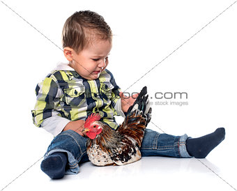 little boy and chicken