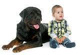 little boy and rottweiler