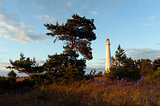 Pine trees and lighthouse