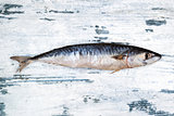 Fresh mackerel on white wooden background.