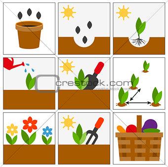 Groving sedlings. Seeds, seedlings and harvest