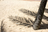 Palm trees shadow on sand