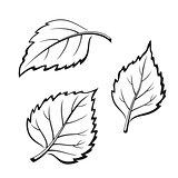 Birch Leaves, Pictogram Set