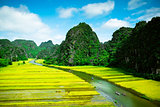 Rice fields and river