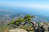 Demerji mountain in Crimea near Alushta