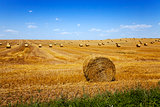 straw stack . harvesting