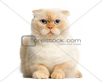 Cat lying in front of a white background
