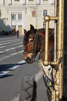A horse harnessed to a carriage on the square