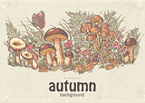 Image of autumn background with white mushrooms, chanterelles and oyster mushrooms