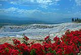 Pamukkale view with red flowers in foreground