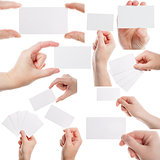 Set of female hands holding business cards