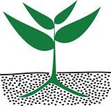 growing plants in soil