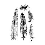 hand draw set of feathers on a white background