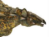 Gargoyleosaurus Dinosaur Head