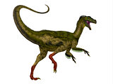 Ornitholestes Dinosaur Tail