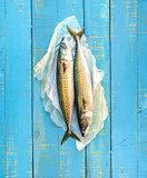 A pair of fresh mackerels.