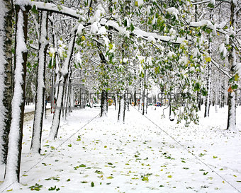 First snow in the autumn city park