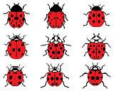 red ladybugs 9