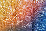 Beautiful winter trees