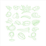 Aloe, Avocado and Coconut Vector Illustration Set