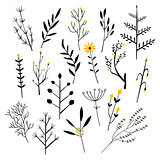 Plants, Flowers and Branches. Vector Illustration Set