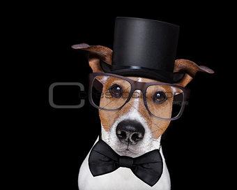 smart dog isolated on black