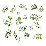 Olive Branches. Vector Illustration