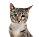 Close-up of a kittenin front of a white background