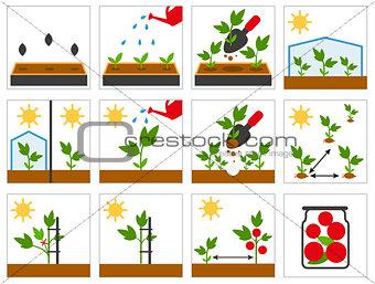 Groving sedlings. Farming seedling. Agricultural engineering