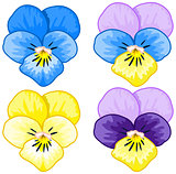 Set of Pansy