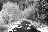 River and forest in winter season