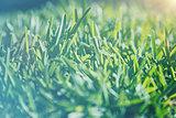 Vintage grass background