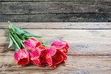 Lovely tulip flowers
