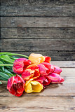 Lovely tulip flowers