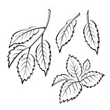 Elm Leaves, Pictogram Set
