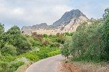 View of a garden near Stellenbosch