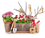 Spring flowers in wooden bucket with garden tools