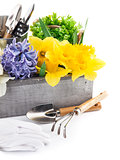 Spring flowers in wooden box with garden tools