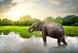 Elefant in pond