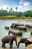 Herd of elefants