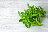 Bundle fresh basil on wooden board